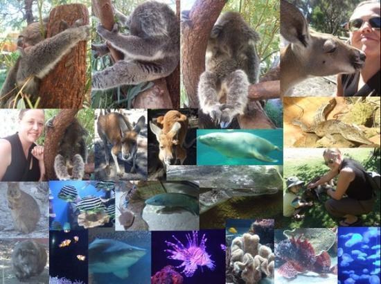 Perth Caversham Wildlife Park & AQWA Aquarium
