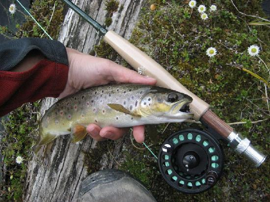 The Old Ferry Hotel Bed & Breakfast: Trout caught with gear lent by Kevin