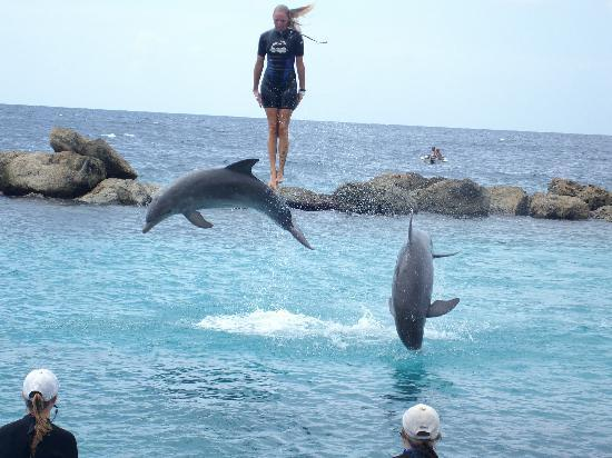 The Royal Sea Aquarium Resort: One of the instructors is lifted in the air during a show at the Aquarium
