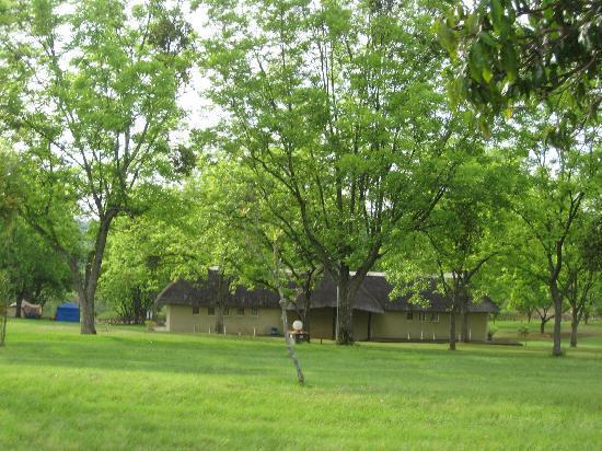 Leo's Resort Camping & Caravan Park : Camping area