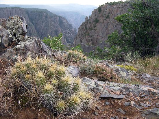 Black Canyon of the Gunnison National Park, South Rim Campground: A view from the Rim Rock Nature Trail