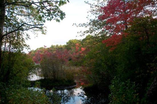 Beech Forest: _DSC6749