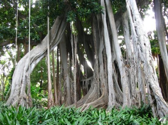 Heliconia Bihai - Picture of Botanical Gardens (Jardin Botanico), Puerto de l...