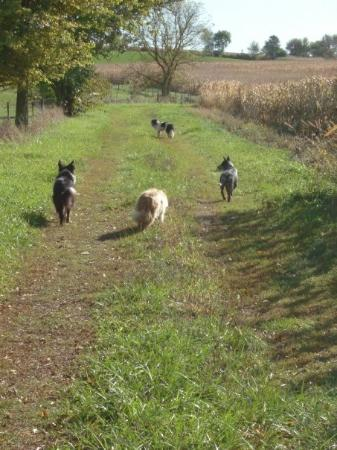 Orangeville, IL: Headed out to check fences and horses. Of course the dogs think it's so they can hunt and chase.