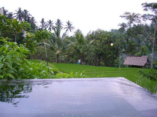 Komaneka at Bisma: Pool with view of rice terrace and farmer hut