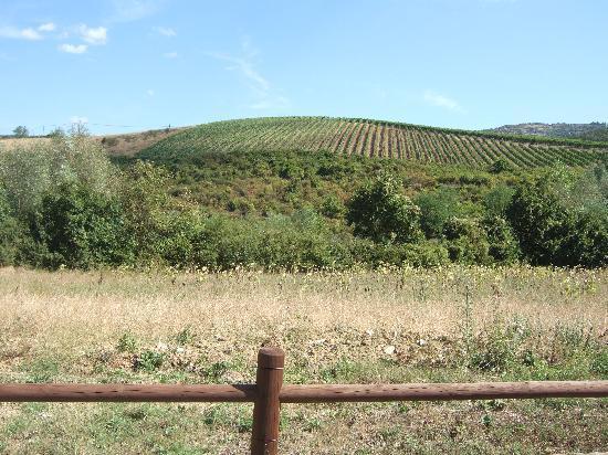 Agriturismo Podere Casa Nova: View of the agriturismo fields