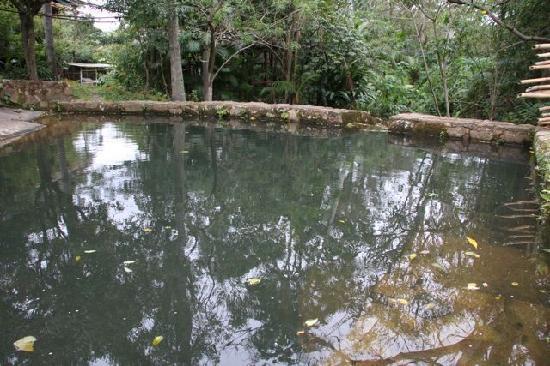 Pousada Sitio Dos Tucanos : Natural swimming pool