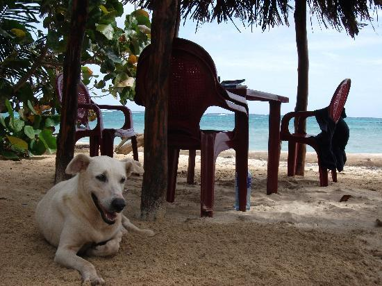 Little Corn Island, Nicaragua: Dogs and Beachfront seating