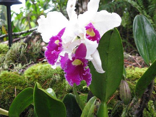 Hale Moana Bed & Breakfast : Hale Moana Hawaii Bed & Breakfast - Garden - Orchids