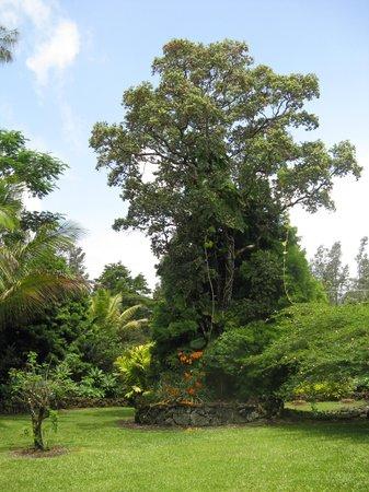 Hale Moana Bed & Breakfast: Hale Moana Hawaii Bed & Breakfast - Tropical Gardens