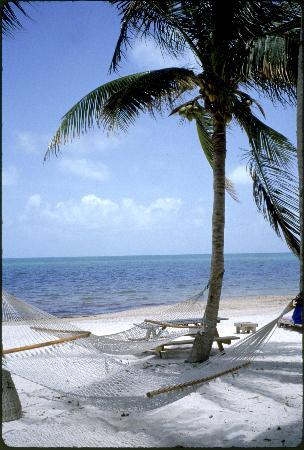 Cocoplum Beach and Tennis Club & Marina: hammock on the beach under palm tree