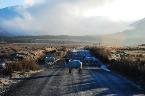 Leenane, Ireland: Connemara 8.01.2010