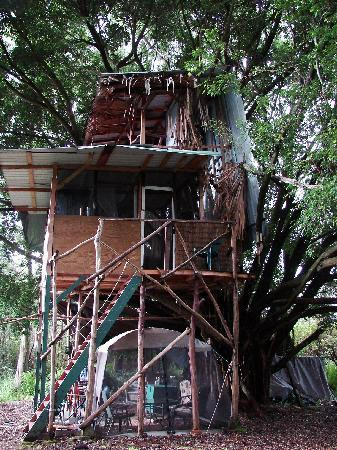 A Beautiful Day, Nani La 'Ao: how often to you get to stay in a real tree house?