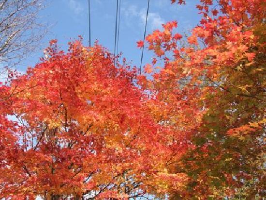 Yubari, Japan: 紅葉