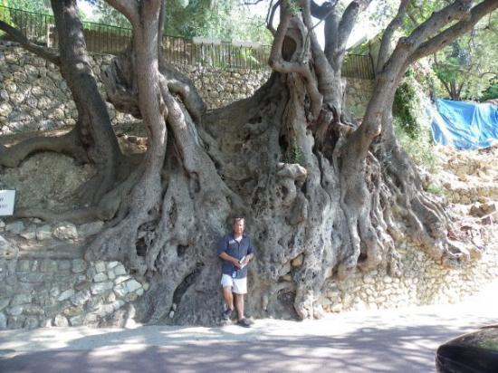 Roquebrune-Cap-Martin, Francia: Roquebrune - l'olivier millénaire