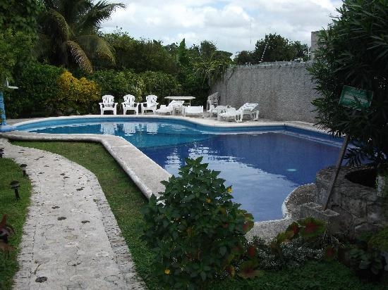 Amigos Hostel Cozumel: Walkway and Pool
