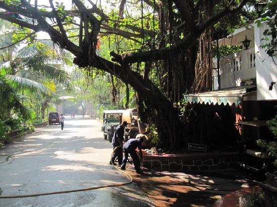 Prakruti Resort: 8