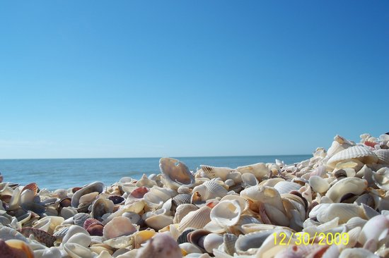 Pulau Sanibel, FL: shells