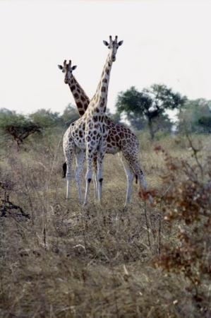 Ảnh về Waza National Park