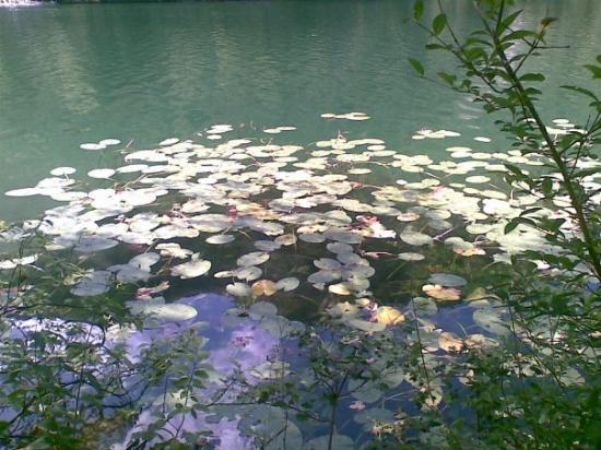 Bad Reichenhall, Germany: trovare delle ninfee o fiori di loto è stata una bella sensazione
