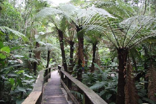 Santo Amaro da Imperatriz, SC: Walk through the property's rainforest