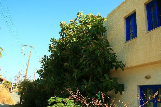 Creta Sun Hotel Studios : the backyard