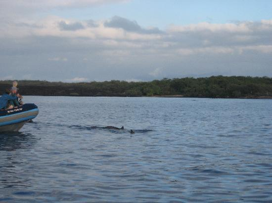 Kihei, HI: dolphins