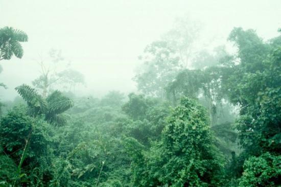 Puyo, เอกวาดอร์: Ecuador 2002 Regenwald bei Pujo