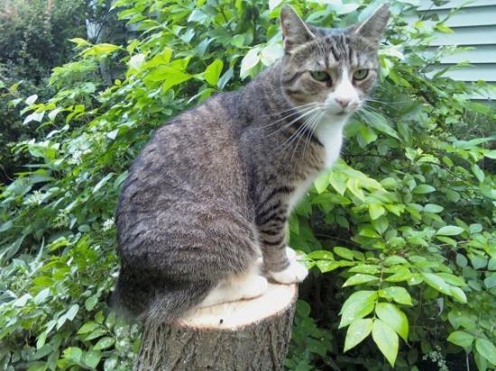 Hemlock, NY: My cat, Hunter