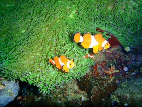HMS Vera Scubadiving : Nemo!