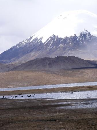 Lauca National Park, Chile: Volcan parinacota