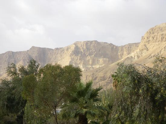 Kibbutz Ein Gedi: lovely view of the oasis from the hotel grounds