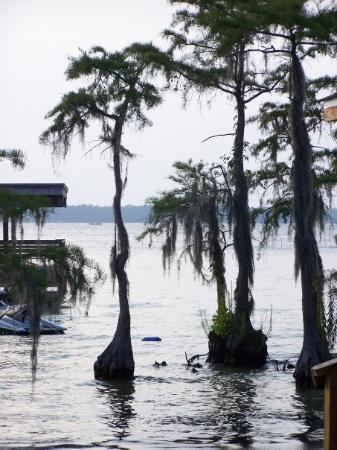 White Lake, NC: Cool trees that grow out of the water!