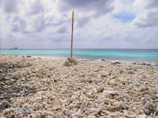 Bonaire: Angel City-Beach