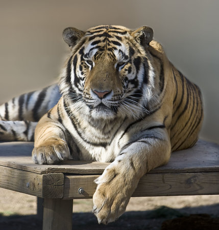 Rockwell, NC: Save the Tigers