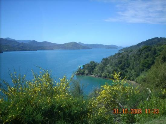 Nelson, New Zealand: the queen charlotte sounds. our drive to picton