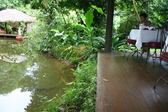 Hacienda La Isla Lodge: Breakfast