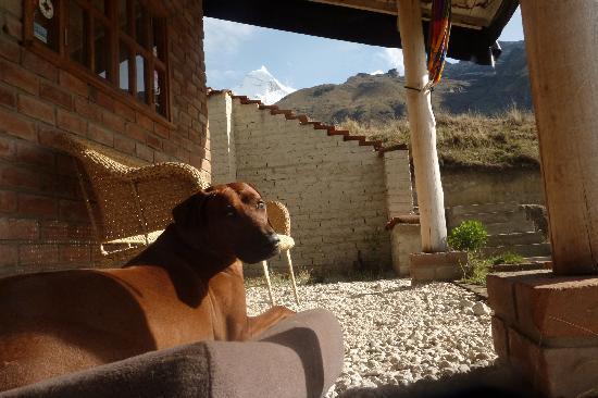 Llanganuco Mountain Lodge : Charlie's rhodesian ridgeback dog, Shackleton