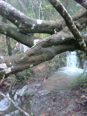 Hidden Valley Inn: Tree that fell blocking the path (the path is covered in water)