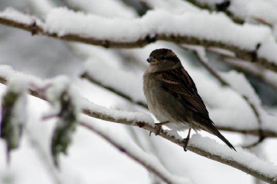 Goldilands B & B: Plenty of birds in the garden all year round