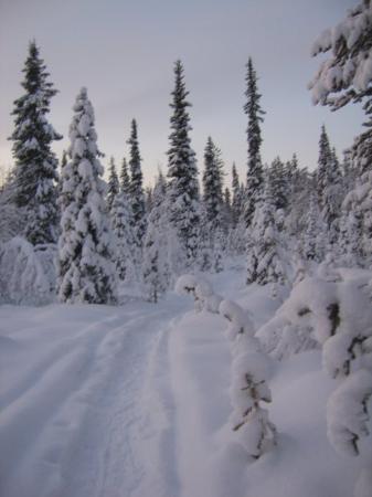Snow Village : Wilderness