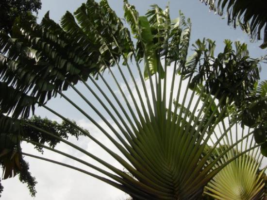 Jardin botanique de deshaies 97126 deshaies guadeloupe for Jardin botanique guadeloupe