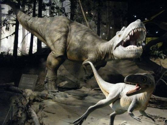 Museu Real de Tyrrel: Royal Tyrrell Museum