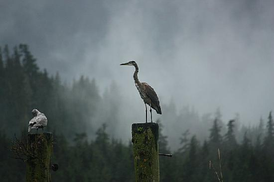 Grizzly Bear Lodge & Safari: Stunning photo - taken on the jetty near the Grizzly Bear viewing area
