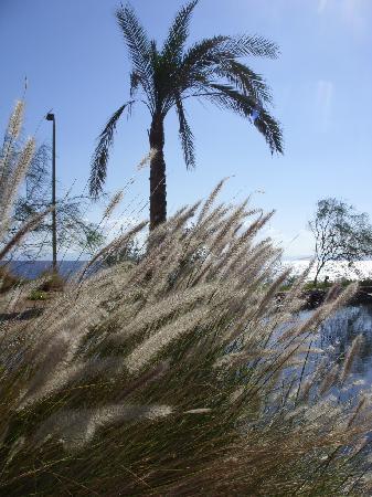 Dahab Paradise : Garden Of Eden
