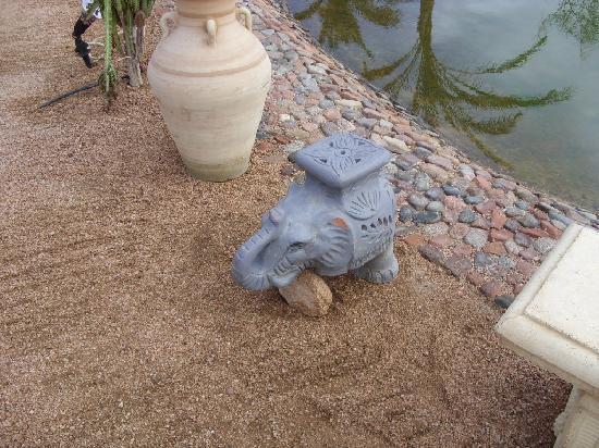 Dahab Paradise : The rescued elephant donated to the Paradise!