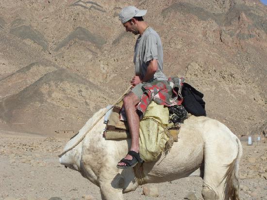 Dahab Paradise : One of the many trips through the hotel, the 'Headless Camal' trek!