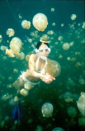 Palau : Jelly Fish Lake