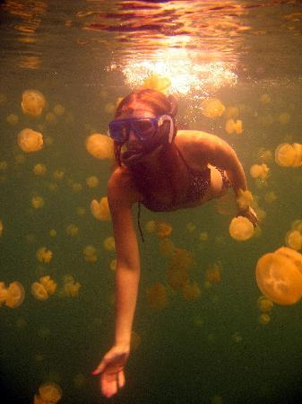 Παλάου: Swim with the jelly fish