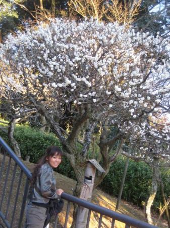 Naritasan Park Photo
